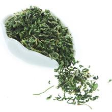 Gesunder natürlicher getrockneter weißer Maulbeerblatt-Tee