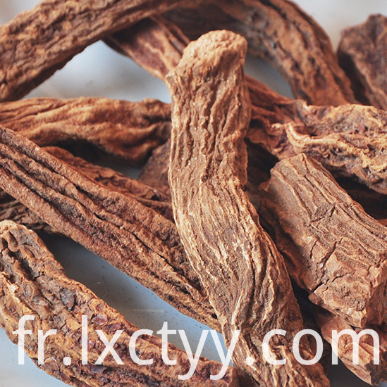 cynomorium songaricum Grain tea