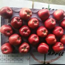 Fresh Fuji Apple Tianshui Huaniu Fuji Fresh apple Fresh Apple Fruits
