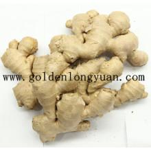 Fresh Ginger EU Market Quality