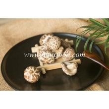Pollution-Free Dried Vegetable Tea Flower Mushroom Producer