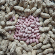 Export Good Quality Fresh Chinese Peanut Kernels