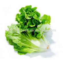 NLT08 Lvis best green lettuce seeds china