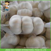 High Quality Fresh White Garlic 5.0CM Mesh Bag In Carton Good Price Jinxiang Chinese