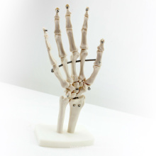 JOINT03 (12349) Medical Anatomy Science Life-Size Hand Joint Human Anatomical Models , Education Models