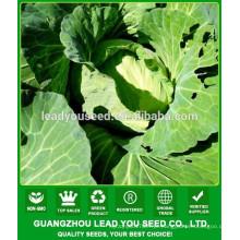 Sementes da couve lisa de NC391 Turan Guangzhou para a venda