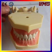 Dientes y modelos dentales para la medicina