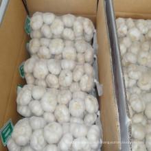 Fournisseur pur d'ail blanc en Chine avec le prix le plus bas