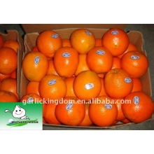 Big Navel Orange in 15kg Papierkarton