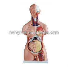 2013 HOT SALE 85CM 21parts modelo de tronco humano de três sexos