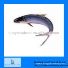 Poisson congelé meilleure qualité anchois congelé