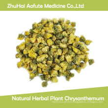 Natural Herbal Plant Chrysanthemum
