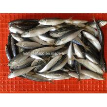 W/R Frozen Horse Mackerel Fish