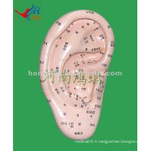 Modèle de massothérapie auditive HR-514A (17 cm), massothérapeute d'acupuncture