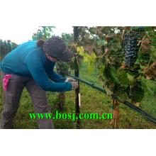 Machine de formage de rouleaux de pâte de raisin Vineyard Grape Brésil