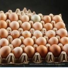 Egg Emballage Cartons Plateau