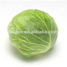Organic Cabbage Powder