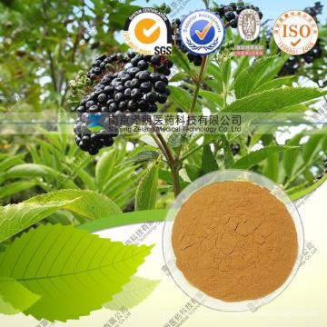 Elderberry Extract 10: 1 Anthocyanins