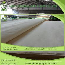 Folheado giratório do álamo da espessura 0.15-0.50mm da categoria do corte do Abcd para a madeira compensada