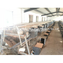 Welded Double Rabbit Cage Wire Mesh