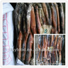 Chinese squid factory / offre A grade illex squid