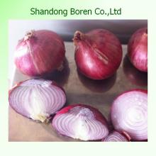Oignon rouge frais à vendre Prix du marché pour l'oignon rouge