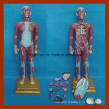 85cm Torso Muscular Humano com Modelo de Anatomia de Órgãos Internos (17 PCS)