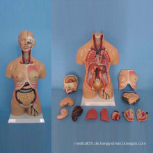 Amphoteres menschliches Torso-Abdomen-Anatomie-Modell für medizinische Demonstration