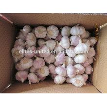 High Quality &Best Price Fresh Garlic