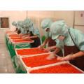 Köstliche heiß-Verkauf rot getrocknete Goji-Beere