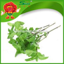 Natural Mint Leaves, slim fit vegetable