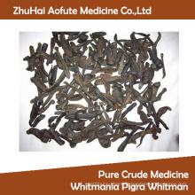 Pure Crude Medicine Whitmania Pigra Whitman