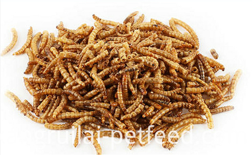 High Quality Dried Yellow Meal