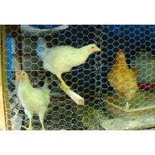Poultry Mesh (R-LJW)