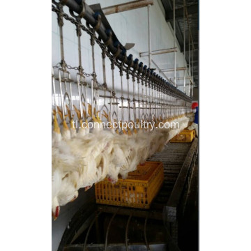 Overhead Conveyor Line ng bird processing line