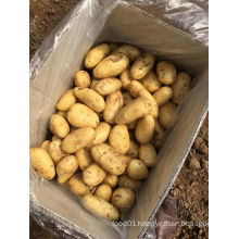 Hot Sale 2016 New Crop Fresh Potato