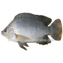 Aquakulturprobiotika