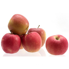 New Crop (SGS AND ISO AND GLOBALGAP) Gala Apple
