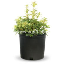 Factory large plastic flower and tree pot