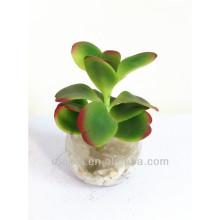 Beautiful mini artificial bonsai plant with glass pot for decor