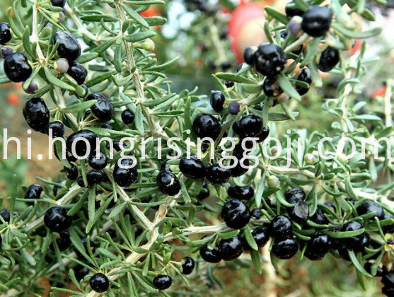 black GOji Berry 3