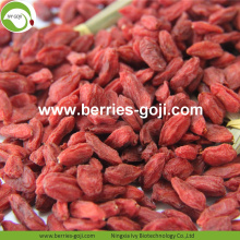 Fábrica Atacado Super Food Nutrition Ningxia Goji