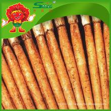 Origen de Yunnan Raíz de Bardana Fresca