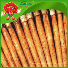 Organic cultivated burdock root for sale