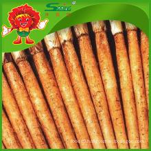 Yunnan Origin Fresh Burdock Root