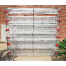 Quail egg laying cages