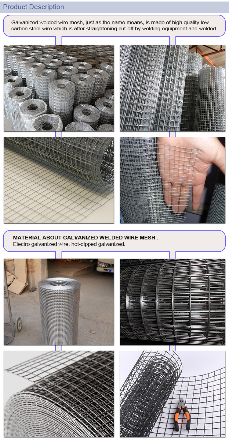 Factory Direct Supply Galvanized & PVC Coated Welded Wire Mesh in roll