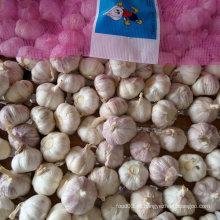 Alho branco fresco chinês em malha 10kg