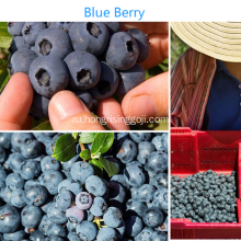 Dried+Blue+Berry+Sweet+Berry