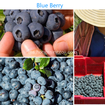 Berry Blue Berry Sweet Berry